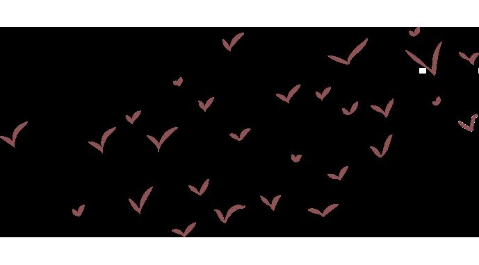 vogels natuureducatie
